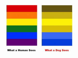 Target, Tumblr, and Blog: What a Human Sees  What a Dog Sees x-space-cowboy:  gay dog pride flag