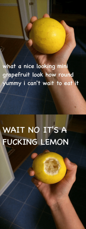 sicknotstupid:  fandom-inc:  yourfriendlyneighborhoodbitch:  fandom-inc:  apparently some lemons are very round and not diamondish anD NOW MY MOUTH IS SCREAMING  WHO THE FUCK TAKES A BITE STRAIGHT OUT OF A LEMON  I TOLD YOU I THOUGHT IT WAS A FUCKING GRAPEFRUIT  WHO THE FUCK TAKES A BITE STRAIGHT OUT OF A GRAPEFRUIT : what a nice looking mirn  grapefruit look how round  ummy i can't wait to eat it   WAIT NO IT'S A  FUCKING LEMON sicknotstupid:  fandom-inc:  yourfriendlyneighborhoodbitch:  fandom-inc:  apparently some lemons are very round and not diamondish anD NOW MY MOUTH IS SCREAMING  WHO THE FUCK TAKES A BITE STRAIGHT OUT OF A LEMON  I TOLD YOU I THOUGHT IT WAS A FUCKING GRAPEFRUIT  WHO THE FUCK TAKES A BITE STRAIGHT OUT OF A GRAPEFRUIT