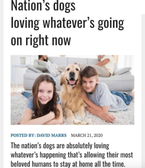 What a nice time to be a canine: What a nice time to be a canine