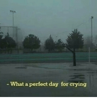 Crying, Day, and What: What a perfect day for crying