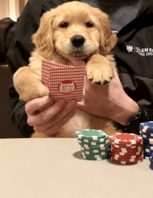 What a poker face: What a poker face