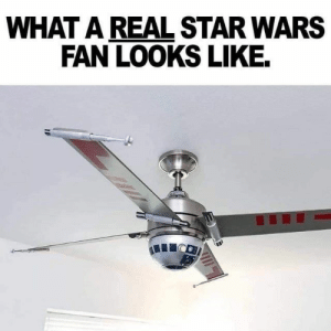 They're not exactly right, but they're definitely not wrong. #funny #pun #memes #stupid #dumb #clever: WHAT A REAL STAR WARS  FAN LOOKS LIKE. They're not exactly right, but they're definitely not wrong. #funny #pun #memes #stupid #dumb #clever