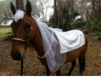 what a shame the poor grooms bride is a horse: what a shame the poor grooms bride is a horse