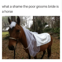 PFFFT  -Frieza: what a shame the poor grooms bride is  a horse PFFFT  -Frieza