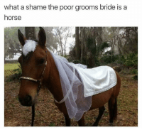 what a shame: what a shame the poor grooms bride is a  horse