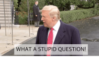 Stupid Gif: WHAT A STUPID QUESTION