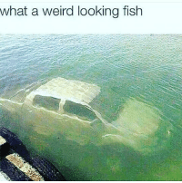 Funny, Weird, and Fish: what a weird looking fish