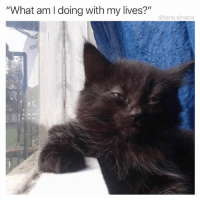 "Animal, Pictures, and Hilarious: ""What am I doing with my lives?""  @tank.sinatra 30 Of The Most Hilarious Animal Pictures That Will Make Your Day"
