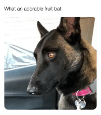 Meme, Memes, and Reddit: What an adorable fruit bat (@doggosdoingthings) is the best dog meme account! (📹: reddit u-Jubenheim)
