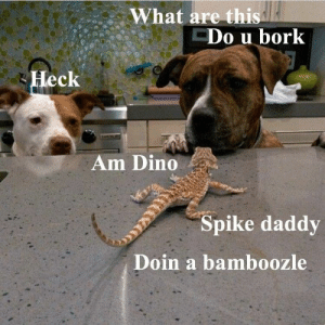 Animals, Funny, and Memes: What are this  Do u bork  Heck  Am Dino  Spike daddy  Doin a bamboozle 42 Funny Dog Memes That'll Make Your Day! - Lovely Animals World