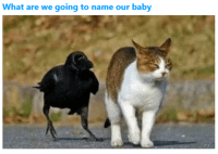 Animals, Images, and Baby: What are we going to name our baby 16+ Trending Animals Images Of The Day
