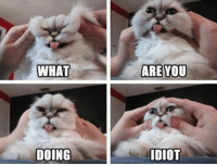Here are cats that totally hate you right now, even if you just do it because you love them.  #cats # hate # humans # cat memes # funny memes # cat photos: WHAT  ARE YOU  DOING  DIOT Here are cats that totally hate you right now, even if you just do it because you love them.  #cats # hate # humans # cat memes # funny memes # cat photos