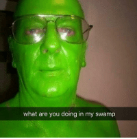 What Are You Doing In My Swamp: what are you doing in my swamp