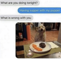 Memes, What Is, and 🤖: What are you doing tonight?  Having supper with my pupper  What is wrong with you https://t.co/9VuRknaLgr