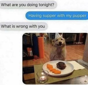 Dank, What Is, and 🤖: What are you doing tonight?  Having supper with my pupper  What is wrong with you