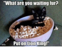 "Memes, Lion, and Lion King: ""What are you waiting fur?  nbkc  Put on Lion  King!"""