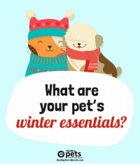 Mercola Com: What are  your pet's  winter essentials?  Healthy  HealthyPets.Mercola.com