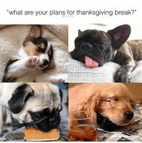 """Memes, 🤖, and What Ares: what are your plans for thanksgiving break?"""" bottom left dog = me me me"""