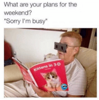 "Funny, Memes, and Sorry: What are your plans for the  weekend?  ""Sorry I'm busy""  Kittens in 3-D SarcasmOnly"