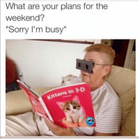 "Sorry I'm busy: What are your plans for the  weekend?  ""Sorry I'm busy""  Kittens in 3-D Sorry I'm busy"