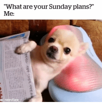 "Sunday, What, and For: ""What are your Sunday plans?""  Me:  djo  newsflare Sundays are for chilling 😂🙌"
