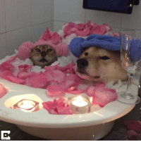 """News, Valentine's Day, and Day: """"What are your Valentine's Day plans?""""  Me:   Credit: Caters News"""