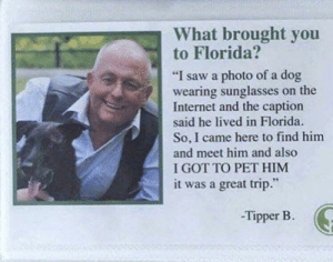 "Internet, Saw, and Florida: What brought you  to Florida?  ""I saw a photo of a dog  wearing sunglasses on the  Internet and the caption  said he lived in Florida.  So, I came here to find him  and meet him and also  I GOT TO PET HIM  it was a great trip.""  -Tipper B. Fair enough"