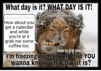 Lol...Mr camel is grumpy today!: What day is it? WHAT DAY IS IT!  Made by grab your coffee.  How about you  get a calendar  and while  you're at it  grab me some  coffee too.  made by grab your coffee  I'm freezing my hump off and YOU  wanna know what day it is? Lol...Mr camel is grumpy today!