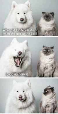 "Cinderella , Tumblr, and Blog: What did Cinderella do  when she got to the ball?  gaggingnoises <p><a href=""http://awesomacious.tumblr.com/post/171236641537/i-died-a-little-today"" class=""tumblr_blog"">awesomacious</a>:</p>  <blockquote><p>I died a little today</p></blockquote>"