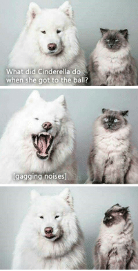 "Cinderella , Tumblr, and Blog: What did Cinderella do  when she got to the ball?  gagging noises <p><a href=""http://awesomacious.tumblr.com/post/173191318983/cinderella"" class=""tumblr_blog"">awesomacious</a>:</p>  <blockquote><p>Cinderella</p></blockquote>"