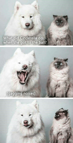 Cinderella , Got, and She: What did Cinderella do  when she got to the ball?  gagging noises Cinderella