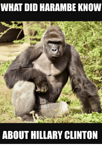 Harambe knew the truth!: WHAT DID HARAMBE KNOW  ABOUT HILLARY CLINTON Harambe knew the truth!
