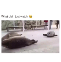 Watch, Did, and What: What did I just watch e