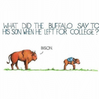 what did the buffalo say to his son