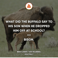Memes, School, and Shit: WHAT DID THE BUFFALO SAY TO  HIS SON WHEN HE DROPPED  HIM OFF AT SCHOOL?  BISON.  MUCH LAUGHS. SUCH HILARIOUS.  @SHIT BOLT 👌