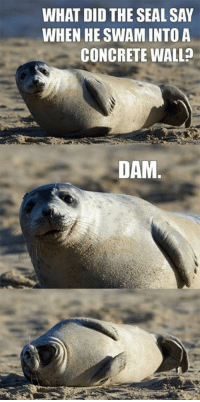 Seal: WHAT DID THE SEAL SAY  WHEN HE SWAMINTOA  CONCRETE WALL  DAM.