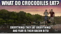 Memes, Fear, and Bacon: WHAT DO CROCODILES EATP  EVERYTHING! THEY EAT EVERYTHING!  AND FEAR IS THEIR BACON BITS!  mgflip.com