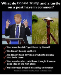Donald Trump, Common, and Good: What do Donald Trump and a turtle  on a post have in common?  You know he didn't get there by himself  He doesn't belong up there  He doesn't have any idea of what to do now  that he is there  You wonder who could have thought it wasa  good idea in the first place  He's elevated beyond his ability to function  No creatures were harmed in creating this post so dont take a fence