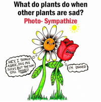 Memes, Sad, and 🤖: What do plants do when  other plants are sad?  Photo- Sympathize  HEY I PEE  AGREE, DOG SUN  BUT THE STILL SHINE SI  ITM SOAKED 🌱 💛 🌱