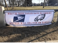 Philadelphia Eagles, Memes, and Super Bowl: WHAT DO THESE EAGLES HAVE IN COMMON?  NEITHER WILL DELIVER ON SUNDAY Just in case anyone was looking for the Eagles to deliver a Super Bowl win on Sunday https://t.co/lox7I4QSt6