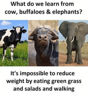 True....: What do we learn from  cow, buffaloes & elephants?  It's impossible to reduce  weight by eating green grass  and salads and walking True....