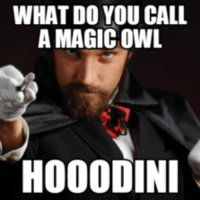 Magic: WHAT DO YOU CALL  A MAGIC OWL  HOOODINI