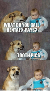 Memes, 🤖, and Pics: WHAT DO YOU CALL  DENTAL X-RAYS?  TOOTH PICS https://t.co/oDdMomPW82