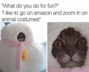 "Cat Memes Of The Day 32 Pics – Ep41 #cat #catmemes #lovelyanimalsworld - Lovely Animals World: ""What do you do for fun?""  ""I like to go on amazon and zoom in on  animal costumes"" Cat Memes Of The Day 32 Pics – Ep41 #cat #catmemes #lovelyanimalsworld - Lovely Animals World"