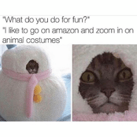 "Amazon, Memes, and Zoom: ""What do you do for fun?""  "" like to go on amazon and zoom in on  animal costumes same (@fluffypiqasso)"
