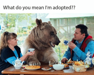 37 Memes That Were Funny Enough To Actually Make You Laugh Out Loud - JustViral.Net: What do you mean I'm adopted?? 37 Memes That Were Funny Enough To Actually Make You Laugh Out Loud - JustViral.Net