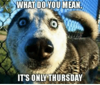 Hang in there.. its almost Friday.  Happy Thursday! Pet ID &  Drivers License Tag  - MyPetDMV.com: WHAT DO YOU MEAN  IT'S ONA THURSDAY Hang in there.. its almost Friday.  Happy Thursday! Pet ID &  Drivers License Tag  - MyPetDMV.com