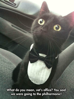 srsfunny:  Poor Deceived Kittyhttp://srsfunny.tumblr.com/: What do you mean, vet's office? You said  we were going to the philharmonic! srsfunny:  Poor Deceived Kittyhttp://srsfunny.tumblr.com/