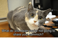 Memes, 🤖, and What Do You Mean: What do you mean you're not going to  share your sammich?