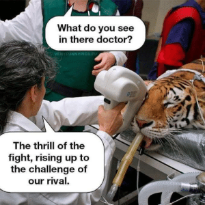 umm ok: What do you see  in there doctor?  VERYFUNNYPICS.EU  082  The thrill of the  fight, rising up to  the challenge of  our rival. umm ok